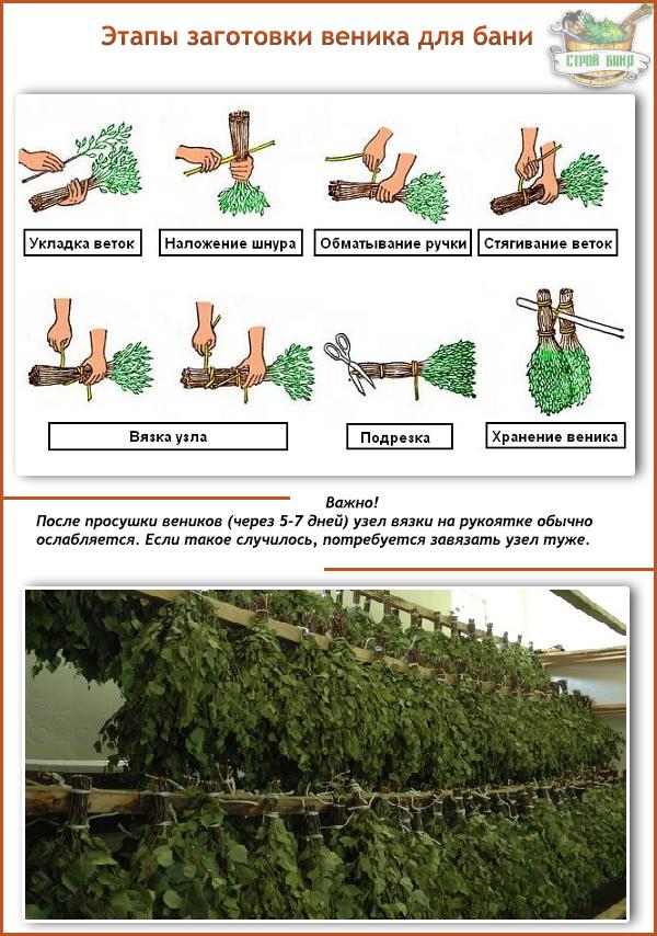 Как правильно вязать веники для бани из березы
