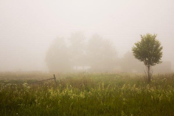 Туман летним утром на дачном участке