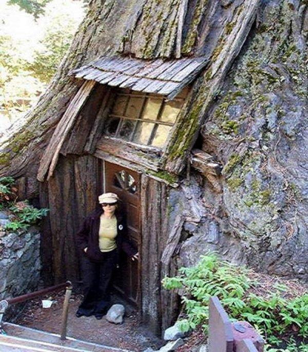 дом в стволе дерева