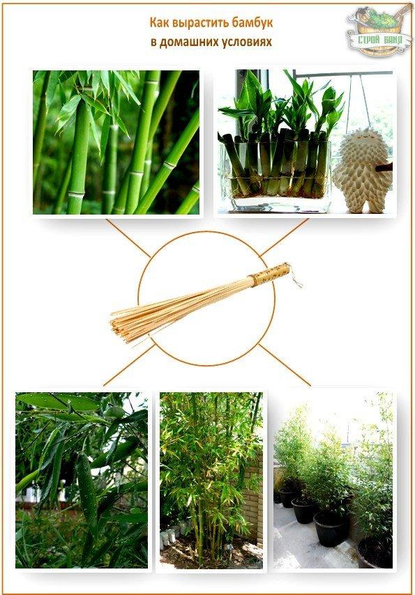 Бамбуковый веник своими руками