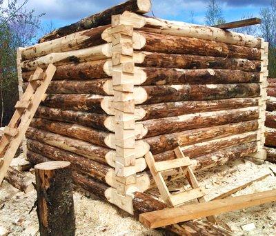 Строим баню из осины: чем хороша осина, как ее правильно заготовить и построить из нее сруб
