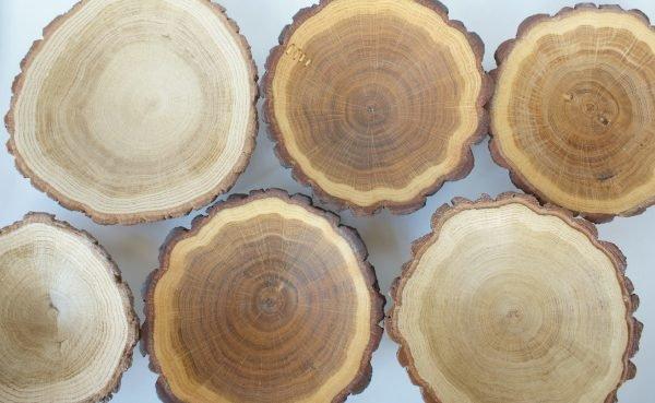 Дерево в разрезе