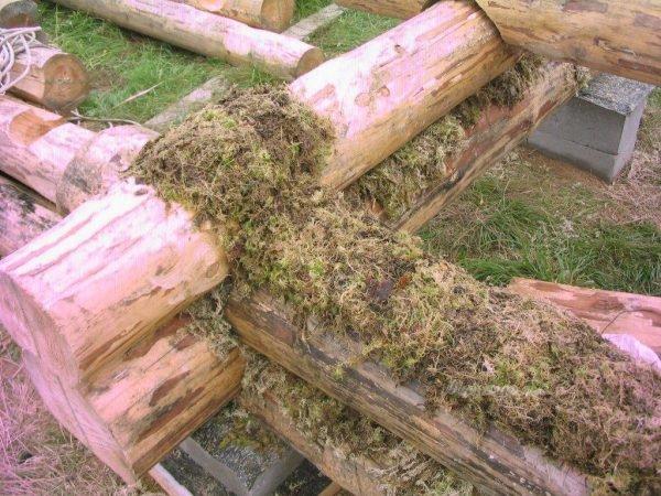 Укладка моха между брёвнами при строительстве бани