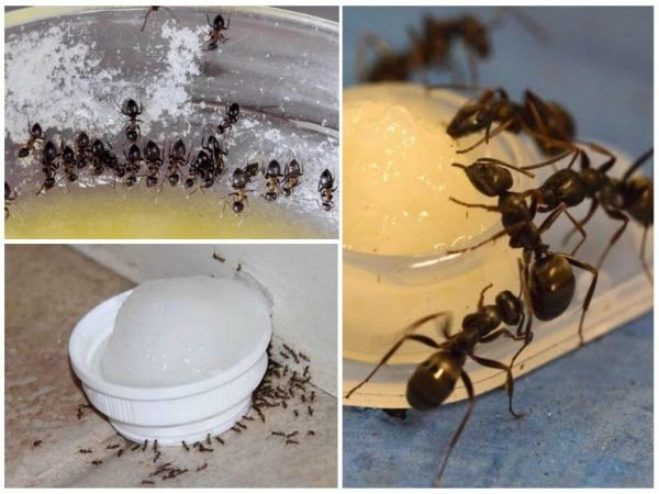 муравьи в бане как избавиться