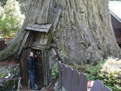 Дом в стволе дерева: фото и описание креативного жилья