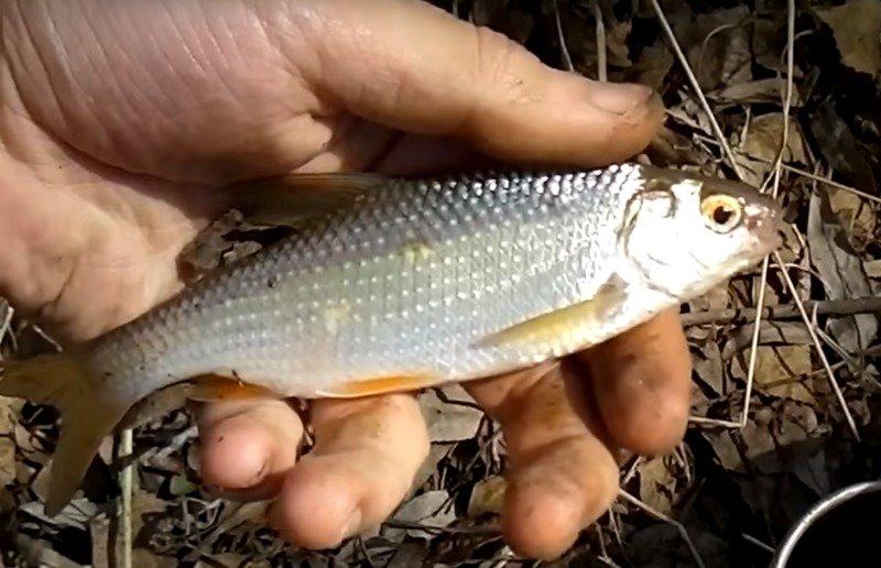 Наживка для рыбалки своими руками: 5 простых рецептов