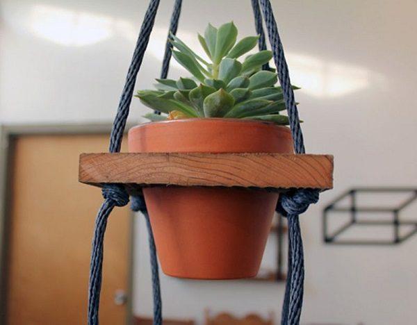 Растение на «качелях»