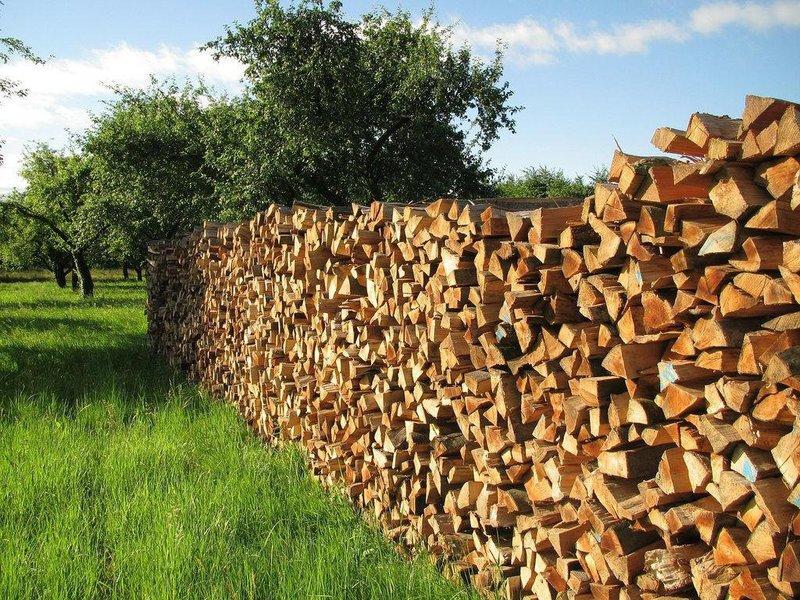 Сколько сохнут дрова разных пород