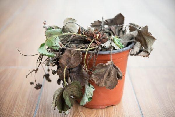 Засохшее растение