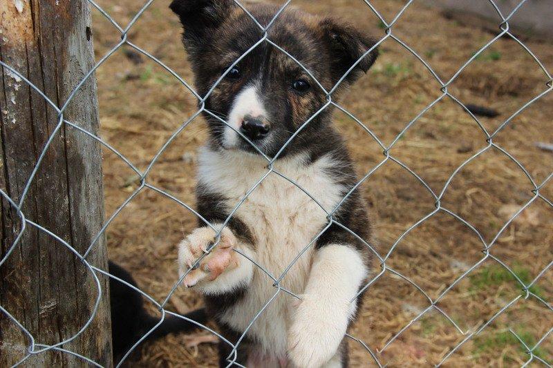 Как сделать простой вольер для собаки своими руками