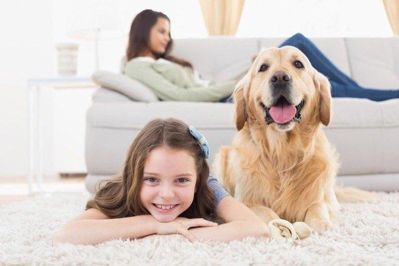 6 эффективных способов, чтобы быстро устранить дома неприятный запах от собаки